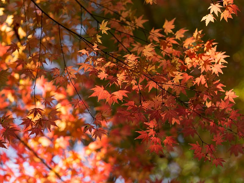 秋の風物詩といえばやはり紅葉。水面に映る紅葉は息を呑む美しさです。