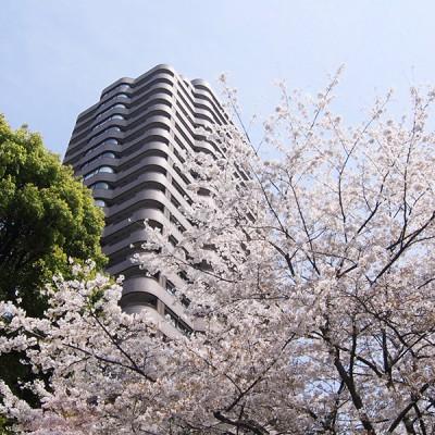 春は桜、秋は紅葉。風光明媚な御殿山庭園を愛でることのできる環境。