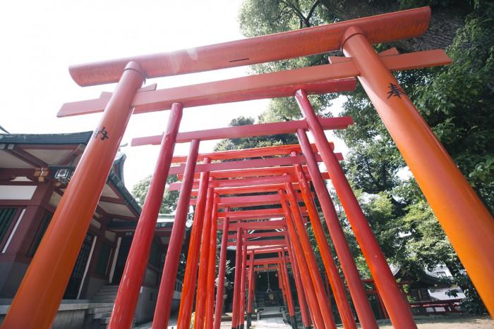 拝殿の横にある阿那稲荷神社へと続く道には朱色の鳥居が並びます。