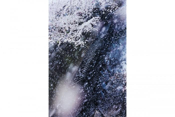 <Mika Ninagawa, PLANT A TREE, 2011  48.5×72.8 cm  C-print ©mika ninagawa  Courtesy of Tomio Koyama Gallery>