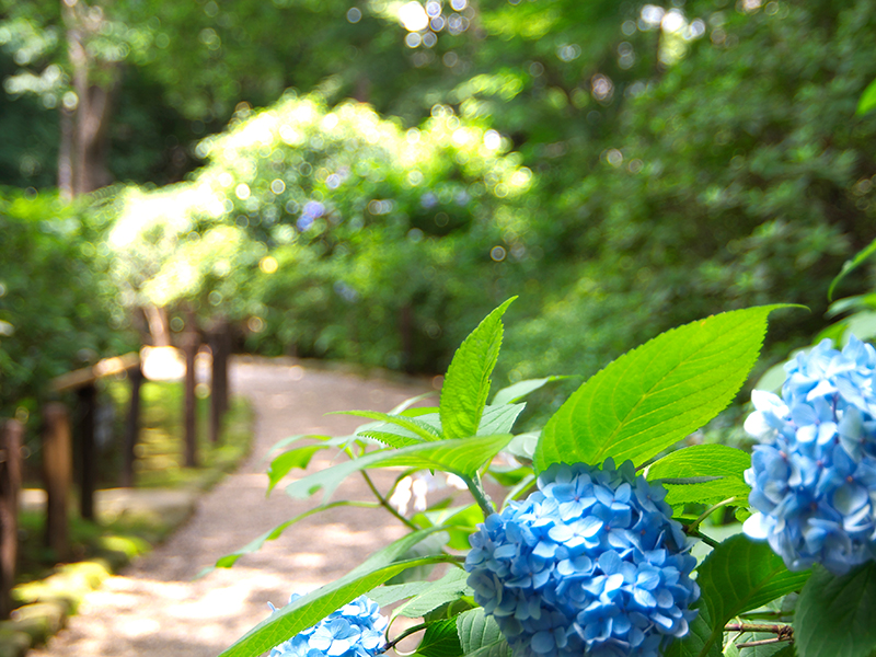 At Gotenyama Garden, visitors can see the different faces of nature even on pathways to the tea house.