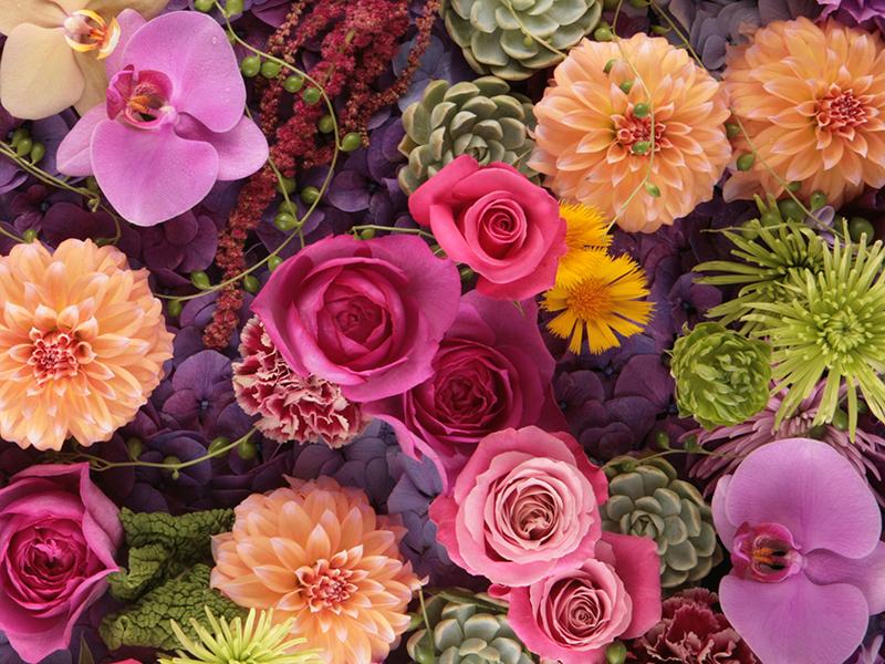 Flower Shop Rainbow