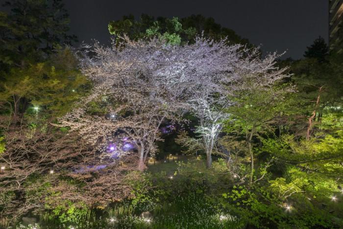 御殿山庭園内ではライトアップが行われ、夜桜が楽しめます。