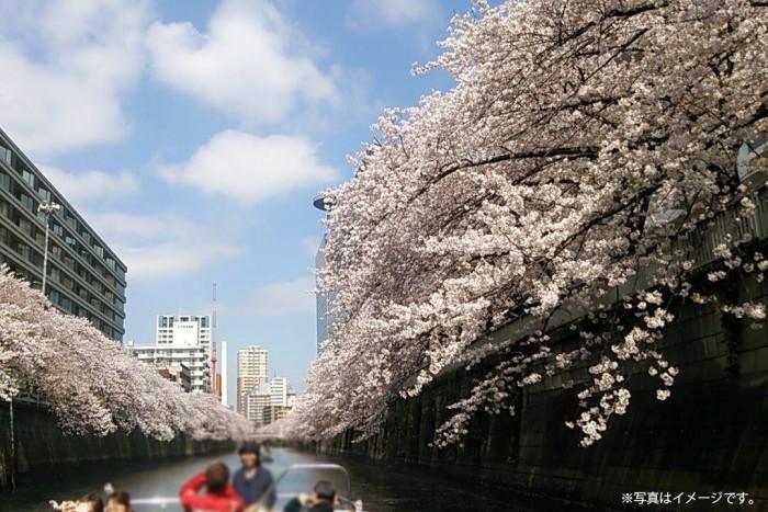 目黒川の両岸には日に日に花開く桜がお出迎え。※写真はイメージです。