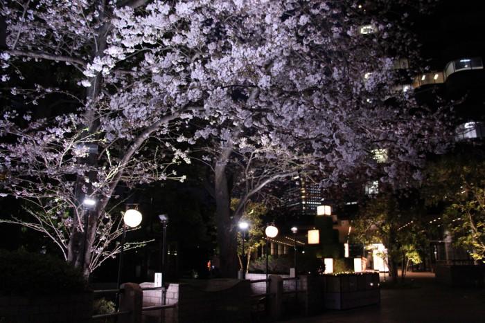 花見提灯が夜の風情を演出します。