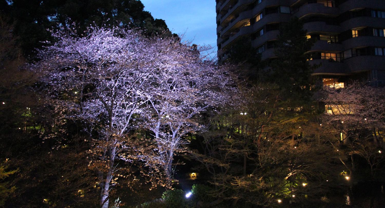 御殿山庭園の夜桜ライトアップ