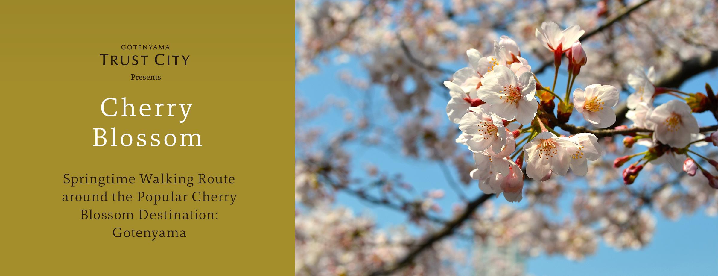 桜の名所の御殿山